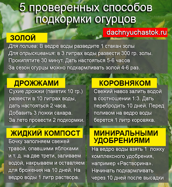 Подкормка огурцов
