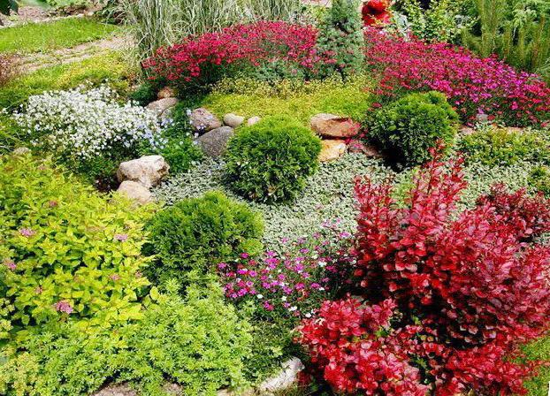 Красивые растения на альпийской горке
