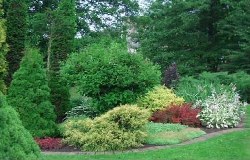 Лужайка в парке.