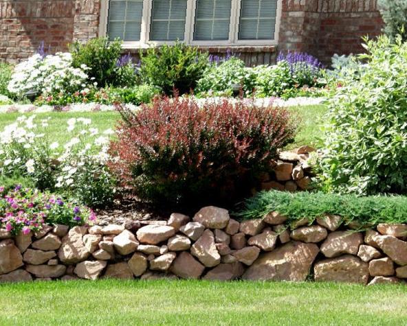 Барбарис в саду.
