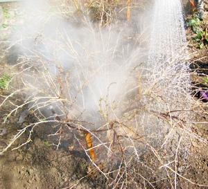 Обработка растений кипятком.