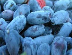 Полезные свойства плодов жимолости.