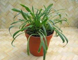 Как сохранить растение зимой.