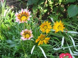 Гацания в саду