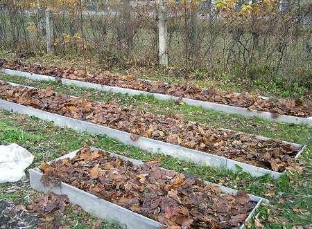 Засыпаем кусты листьями.