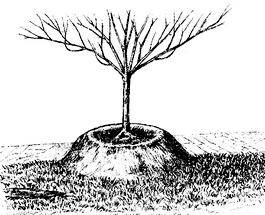 Дерево посажено неправильно.