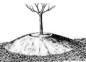 Посадка плодового дерева на холм.