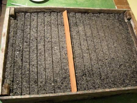 Готовим ящики для посадки семян.