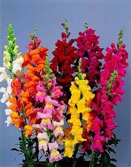 Узор для вязания крючком цветы 56