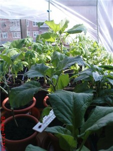 Растения в городской квартире, на подоконнике.