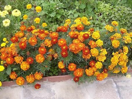 Клумба с цветами.