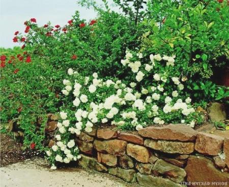 Многоуровневый сад.