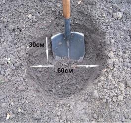 Готовим посадочную яму.