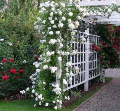 Для вьющихся цветов делают опоры в виде решеток.