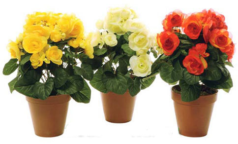 Уход за домашними розами.