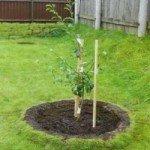 -посадить-дерево-5-e1419079118494