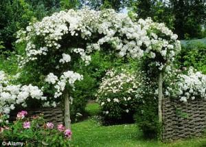 Лучшие цветы.