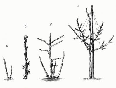Схема формирования штамба.