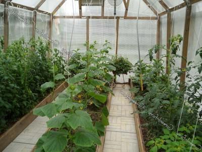 Выращивание овощей в теплице.