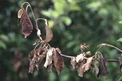 Опадают листья с деревьев.