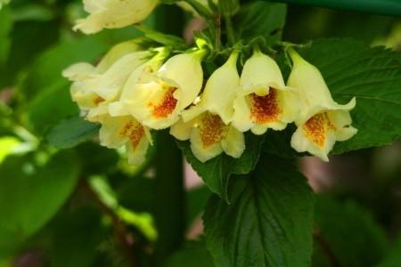 Красивые цветы.