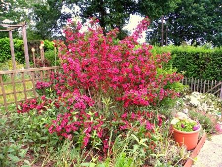 Красивый кустарник в саду.