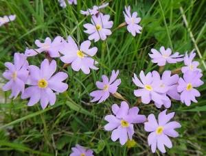 Цветок в саду.