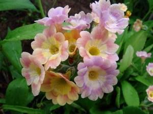 Сорта цветов с фотографиями.