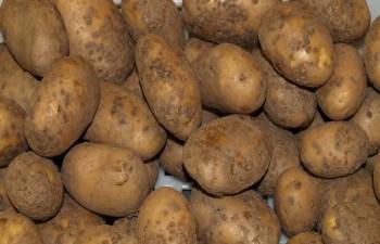 Болезни картофеля.