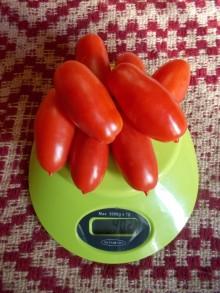 Высокорослый томат для теплиц.
