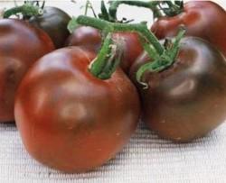 Высокорослые томаты Черный принц