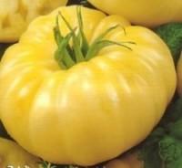 Индетерминантные сорта помидор.