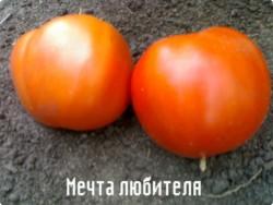 Высокорослые помидоры Мечта любителя.