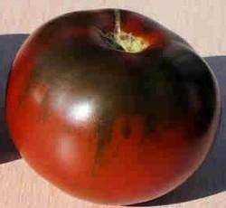 Сильнорослые помидоры.