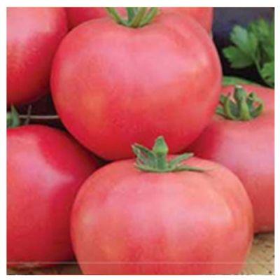 Розовые томаты для открытого грунта.