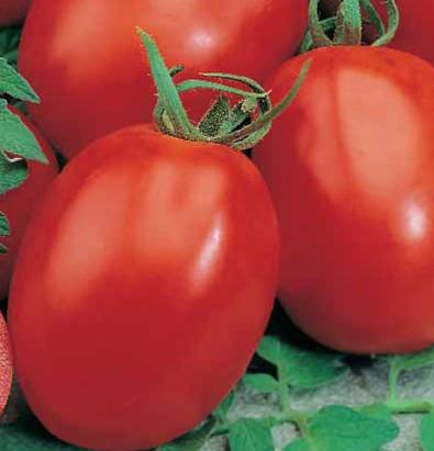 Сорт томата Аделаида