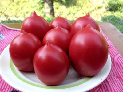Фото сортов томатов