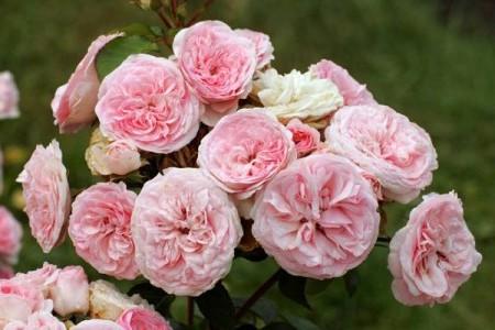 Изображение Царицы цветов.