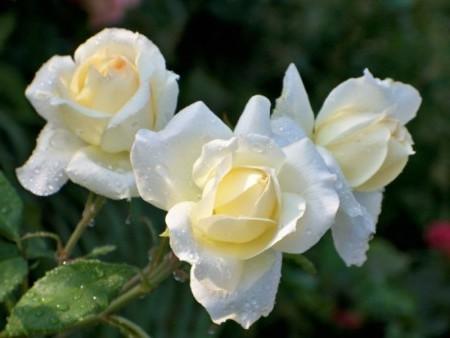 Изображение прекрасных цветов.