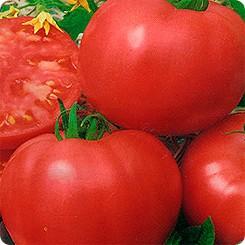 Новый сорт розовых томатов Самурай