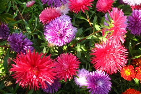 Цветы цветущие в сентябре
