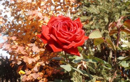 Уход за цветами осенью.