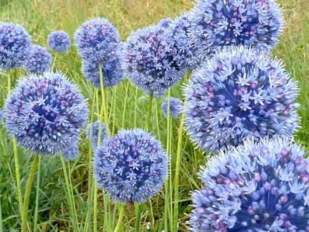 Красивые синие шарики