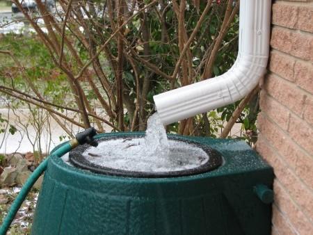 Для полива используем мягкую, дождевую воду