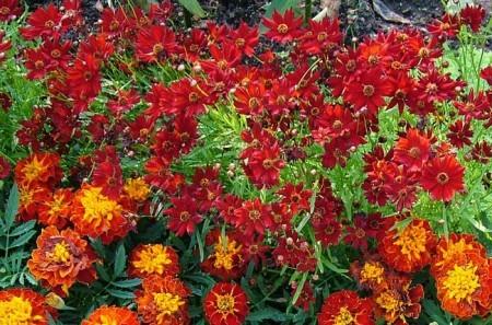 Сентябрьские цветы