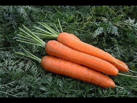 Чем накормить морковь