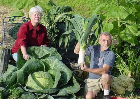 Как удобрять овощи