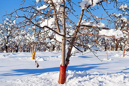 Дачники трудятся и зимой