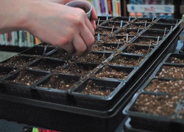 Сеем семена.