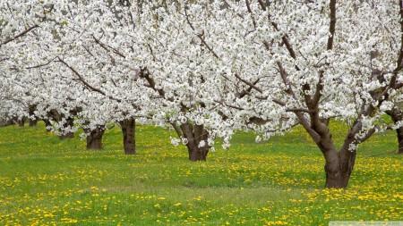 Май на даче: что предстоит сделать в саду и огороде